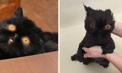 before and after bath cat