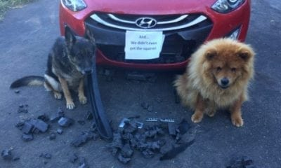 dog shaming car funny squirrel