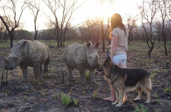baby rhino and dog friend