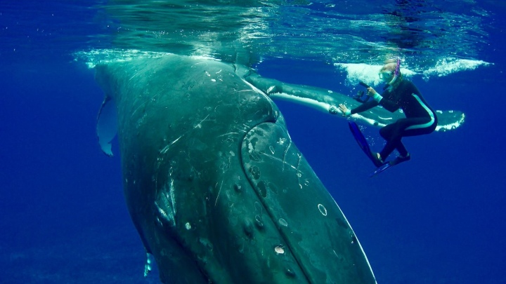 nan hauser and giant whale