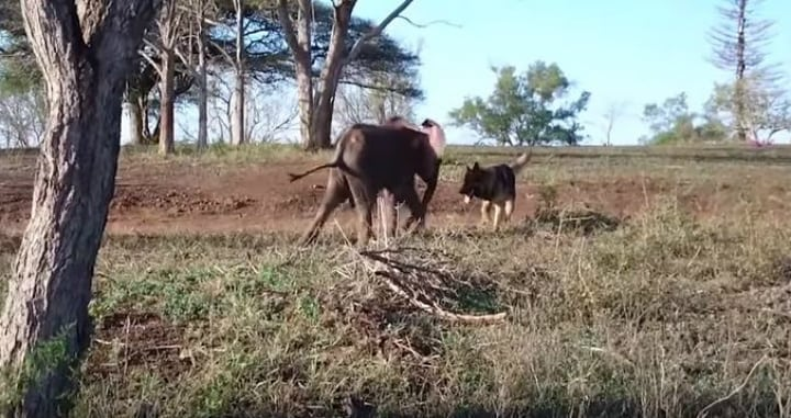 baby elephant - unlikely friend