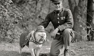marine dog chesty puller