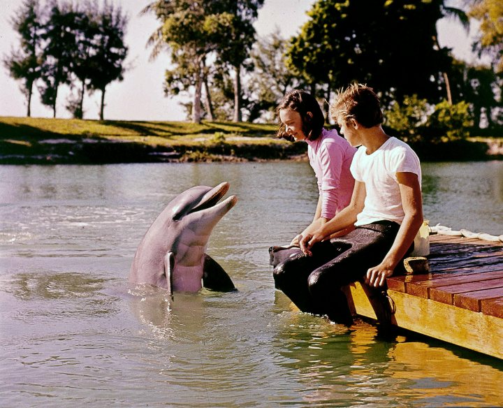 Flipper, childrens shows